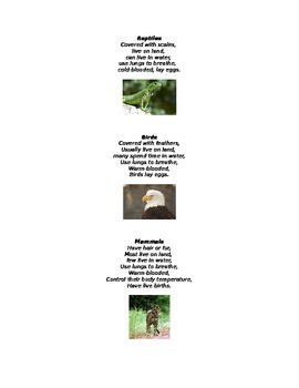 Animal Classification Terms