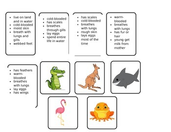 Animal Classification Tree Map