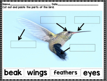 Animal Classification Unit of Study