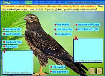 Animal Classification: Vertebrates -  for the SmartBoard/Interactive Whiteboard.