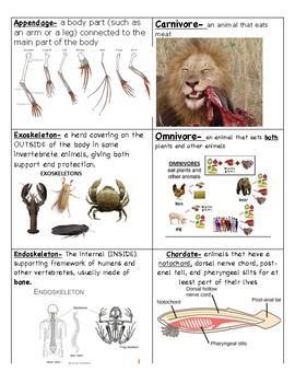Animal Classification Vocabulary