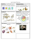 Animal Classification Vocabulary