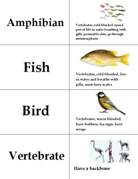 Animal Classification ...