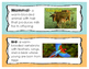 Animal Classification Word Wall