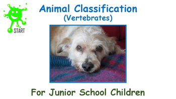 Animal Classification for Junior School Children
