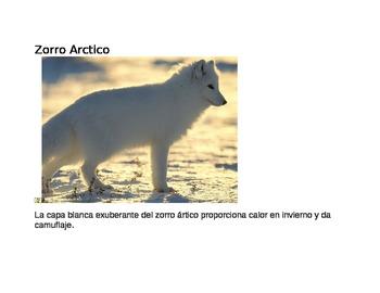 Animal Classification in Spanish