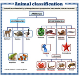 Animal Classification - poster set
