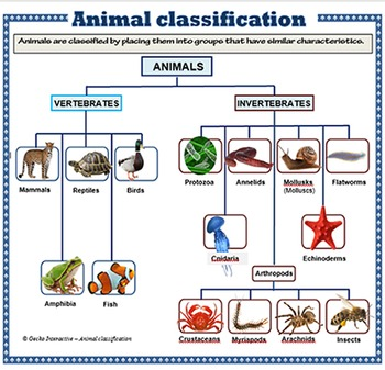 animal classification poster set by gecko interactive tpt. Black Bedroom Furniture Sets. Home Design Ideas
