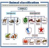 Animal Classification - poster set
