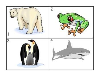 Animal Classification {vertebrates only}