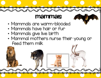 Animal Classifications Activities and Stations