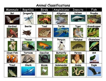 Animal Classifications Picture Sort