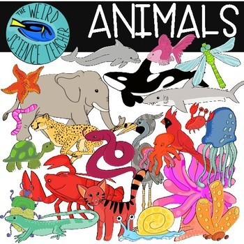 Animal Clip Art: 51 PNG Images - Color and B/W