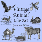 Animal Clip Art - Vintage Style - Realistic Assortment