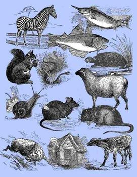 Animal Clip Art - Vintage Style - Realistic Assortment