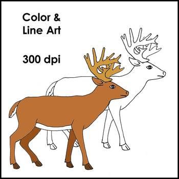 Woodland Animals: Clipart