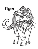Animal Coloring Page: Tiger
