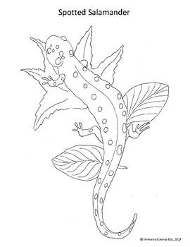 Animal Coloring Pages, Hand Drawn, Mammals, Bugs, Amphibians, Fish