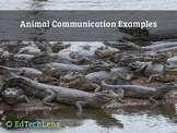 Animal Communication Examples Distance Learning PDF