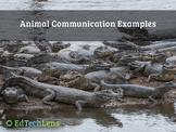 Animal Communication Examples PDF
