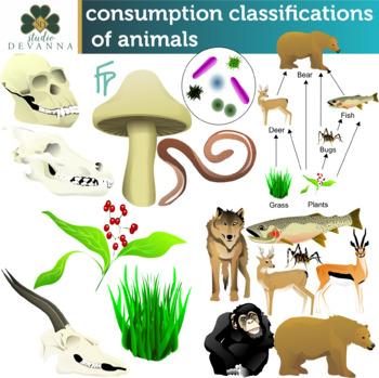 Animal Consumption Classifications Clip Art