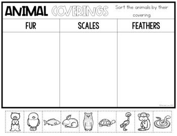 Animal Coverings By Natalie Lynn Kindergarten Teachers Pay Teachers