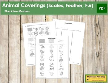 Animal Coverings: Scales, Feathers, Fur - Blackline Masters
