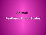 Animal Coverings Feathers, Fur or Scales  Kindergarten