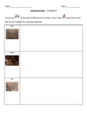Animal Coverings- Investigation