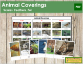 Animal Coverings: Scales, Feathers or Fur? - Sorting Cards & Control Chart