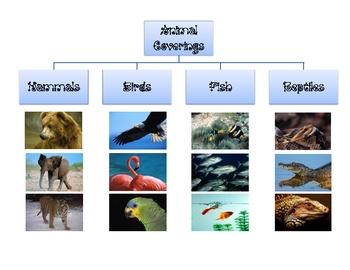 Animal Coverings Tree Map