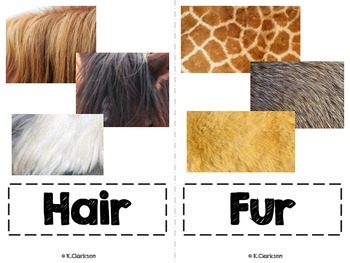 Animal Coverings Vocabulary Cards