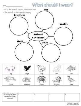 Animal Coverings & Adaptations Worksheet