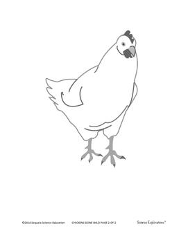 Animal Defenses: Chickens Gone Wild!