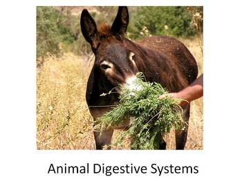 Animal Digestion Unit: Includes Lessons, Activity Pack and PowerPoint