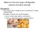 Animal Digestion PowerPoint