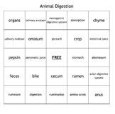 Animal Digestion Vocabulary Bingo for an Agriculture Animal Science Course