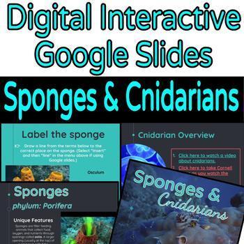 Animal Diversity Sponges & Cnidarians
