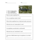 Animal Diversity Webquest