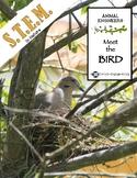 Animal Engineers: Meet the Bird STEM STREAM STEAM Challenge