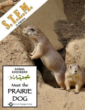 Animal Engineers: Meet the Prairie Dog STEM STREAM STEAM Challenge