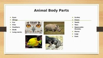 Animal External Characteristics Powerpoint