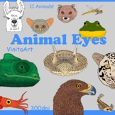 Animal Eyes, clipart illustrations of animals with unique eyes