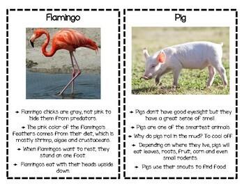 Animal Fact Cards