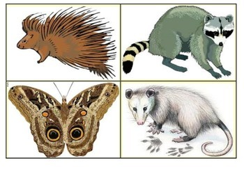Animal Facts Vocabulary Picture Matching (20 Short Passages)