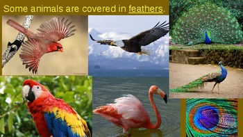 Animal Features:  pictures explain feathers, fur, scales, beaks, tails, etc