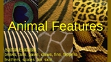 Animal Features:  pictures explain feathers, fur, scales,