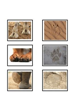 Animal Feet and Footprints