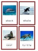 Animal Flash Cards