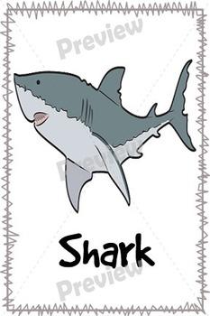 Animal Flash Cards